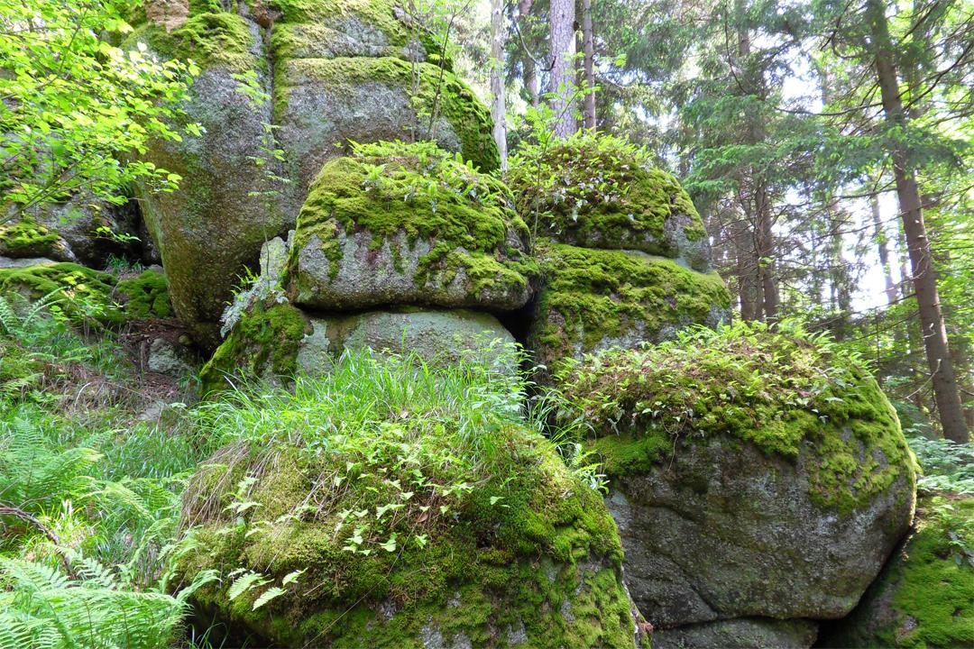 Yoga Retreat im Waldviertel