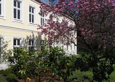 Yogastudio-Garten-Zitrone-Magnolie1