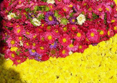 Mysore-Blumen-1-500