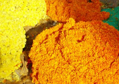 Mysore-Blumen-2-500