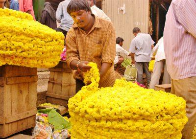 Mysore-Blumen-3