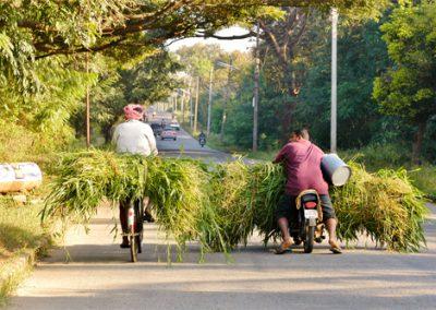 Mysore-Gras-Transport-500