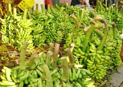 Mysore-Markt-Bananen-500