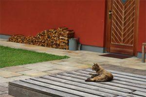 Yoga Urlaub mit Horst im Haus der Stille