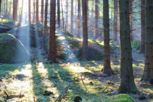 Waldviertel Yoga Urlaub Pureyoga